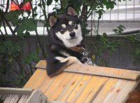 この画像は、サイトの記事「犬 面白い ネットで話題 YouTube注目無料視聴動画ご紹介!」のイメージ写真画像として利用しています。