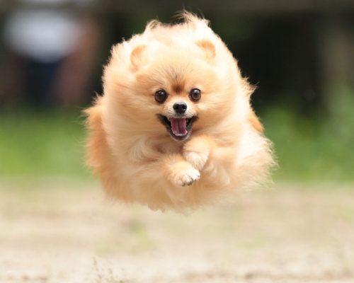 この画像は、サイトの記事「犬 かわいい ネットで話題 YouTube注目無料視聴動画ご紹介!」のイメージ写真画像として利用しています。