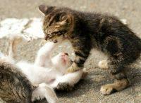 この画像は、サイトの記事「猫 喧嘩 ネットで話題 YouTube注目無料視聴動画ご紹介!」のイメージ写真画像として利用しています。