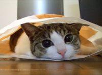 この画像は、サイトの記事「猫 かわいい ネットで話題 YouTube注目無料視聴動画ご紹介!」のイメージ写真画像として利用しています。