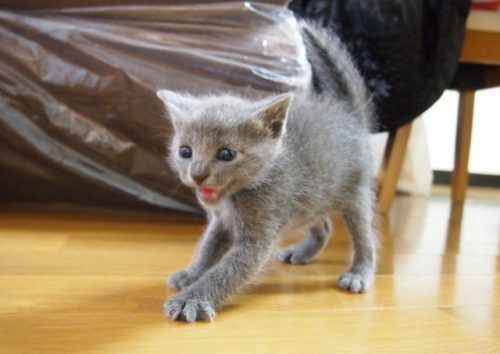 この画像は、サイトの記事「猫 威嚇 ネットで話題 YouTube注目無料視聴動画ご紹介!」のイメージ写真画像として利用しています。