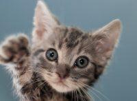 この画像は、サイトの記事「猫 赤ちゃん ネットで話題 YouTube注目無料視聴動画ご紹介!」のイメージ写真画像として利用しています。