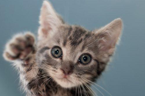 「猫 無料画像」の画像検索結果