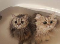 この画像は、サイトの記事「猫 お風呂 ネットで話題 YouTube注目無料視聴動画ご紹介!」のイメージ写真画像として利用しています。