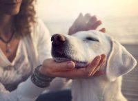 この画像は、サイトの記事「犬 マッサージ 顔 ネットで話題 YouTube注目無料視聴動画ご紹介!」のイメージ写真画像として利用しています。