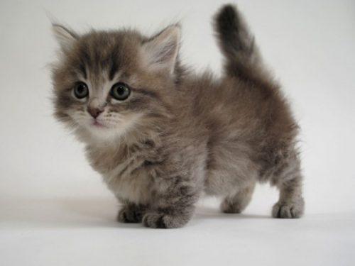 この画像は、サイトの記事「猫 品種 ネットで話題 YouTube注目無料視聴動画ご紹介!」のイメージ写真画像として利用しています。