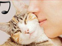 この画像は、サイトの記事「猫 病気 音楽 ネットで話題 YouTube注目無料視聴動画ご紹介!」のイメージ写真画像として利用しています。
