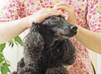 この画像は、サイトの記事「犬 マッサージ ツボ ネットで話題 YouTube注目無料視聴動画ご紹介!」のイメージ写真画像として利用しています。