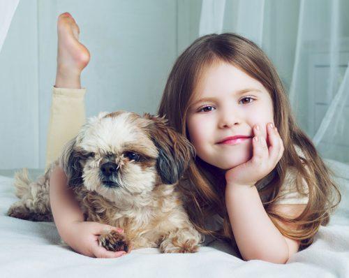 この画像は、サイトの記事「犬 マッサージ 頭 ネットで話題 YouTube注目無料視聴動画ご紹介!」のイメージ写真画像として利用しています。