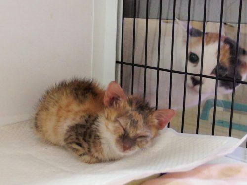この画像は、サイトの記事「猫 病気 ネットで話題 YouTube注目無料視聴動画ご紹介!」のイメージ写真画像として利用しています。