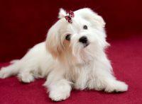 この画像は、サイトの記事「犬 可愛い 鳴き声 ネットで話題 YouTube注目無料視聴動画ご紹介!」のイメージ写真画像として利用しています。