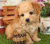 この画像は、サイトの記事「犬 鳴き声 トイプードル ネットで話題 YouTube注目無料視聴動画ご紹介!」のイメージ写真画像として利用しています。
