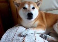 この画像は、サイトの記事「犬 鳴き声 効果音 ネットで話題 YouTube注目無料視聴動画ご紹介!」のイメージ写真画像として利用しています。