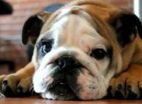 この画像は、サイトの記事「犬 鳴き声 面白い ネットで話題 YouTube注目無料視聴動画ご紹介!」のイメージ写真画像として利用しています。