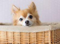 この画像は、サイトの記事「犬 鳴き声 甘え ネットで話題 YouTube注目無料視聴動画ご紹介!」のイメージ写真画像として利用しています。