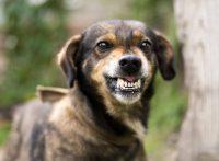 この画像は、サイトの記事「犬 鳴き声 威嚇 ネットで話題 YouTube注目無料視聴動画ご紹介!」のイメージ写真画像として利用しています。