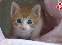 このイメージ画像は、このサイト記事「Miaou 猫 おすすめ動画&人気YouTubeランキングまとめ!」のアイキャッチ画像として利用しています。