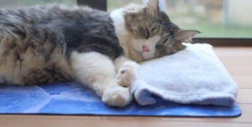このイメージ画像は、このサイト記事「Pastel Cat World ボス吉 おすすめ動画&人気YouTubeランキングまとめ!」のアイキャッチ画像として利用しています。