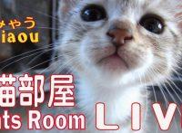 このイメージ画像は、このサイト記事「Miaou みゃう ライブ おすすめ動画&人気YouTubeランキングまとめ!」のアイキャッチ画像として利用しています。