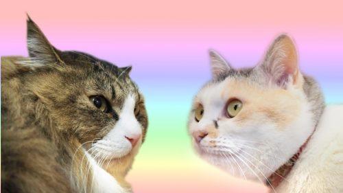 このイメージ画像は、このサイト記事「Pastel Cat World 公式 おすすめYouTube&人気動画ランキング」のアイキャッチ画像として利用しています。